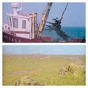 Guam skupljanje algi